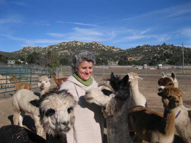 Jewish couple raise alpacas in descanso