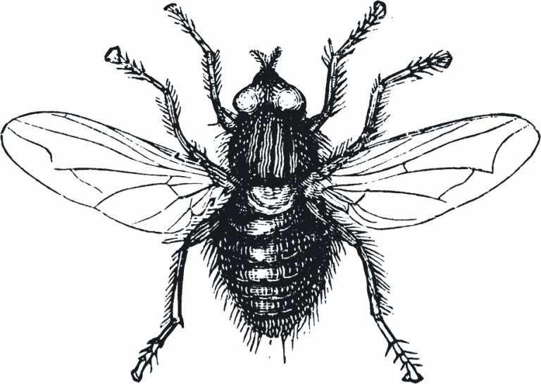 ¿Qué onda con… …las moscas?