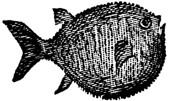 ¿Qué onda con el pez globo?